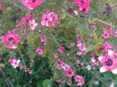 aménagement de jardin à Bordeaux