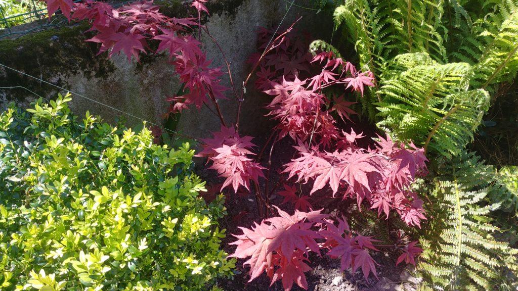 jardin à Bordeaux