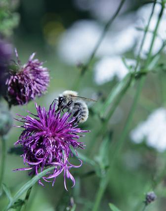 prairie fleurie insecte jardin