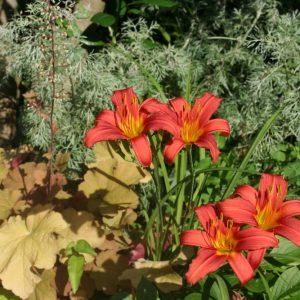 paysagiste en Charente