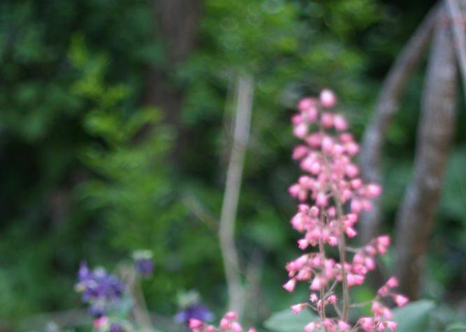 jardin en avril conseil