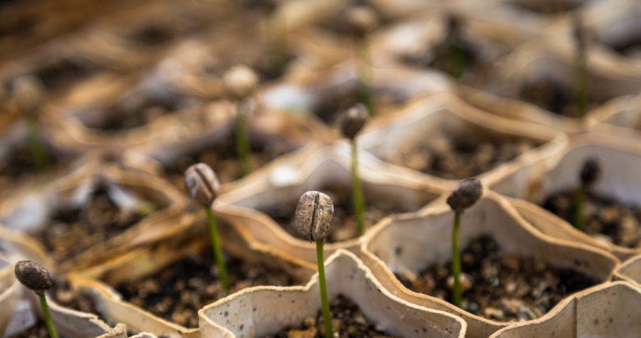 jardin à Paris graines