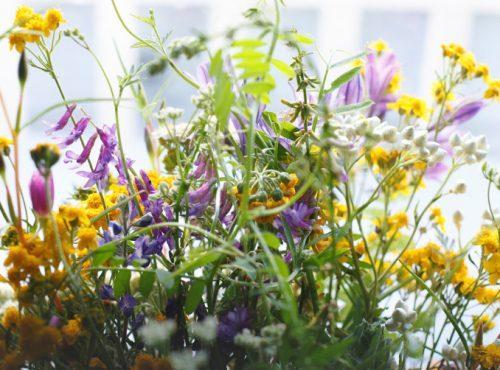 associations de plantes vivaces paysagiste paris