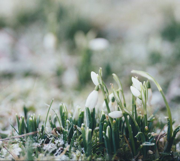 Nettoyage de jardin du printemps conseils paysagiste for Nettoyage jardin printemps