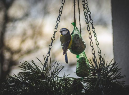 mangeoire nichoir oiseaux jardin
